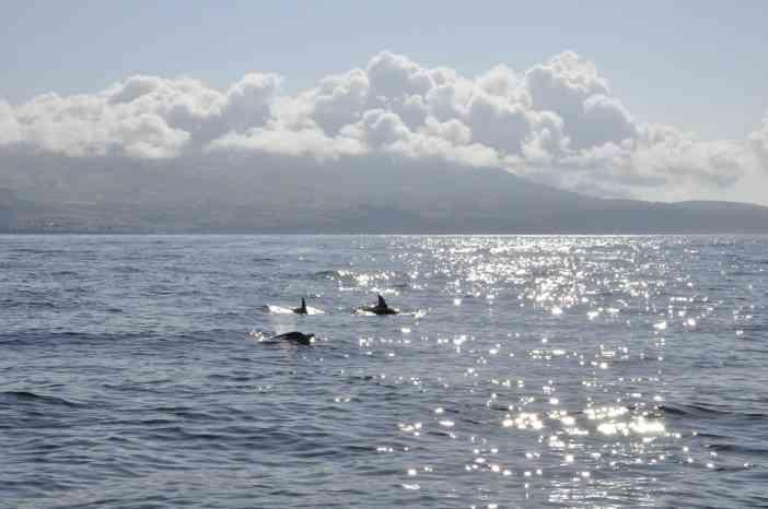 En lo profundo del Océano. AZORES by © Rocío Pastor Eugenio ® WOMANWORD