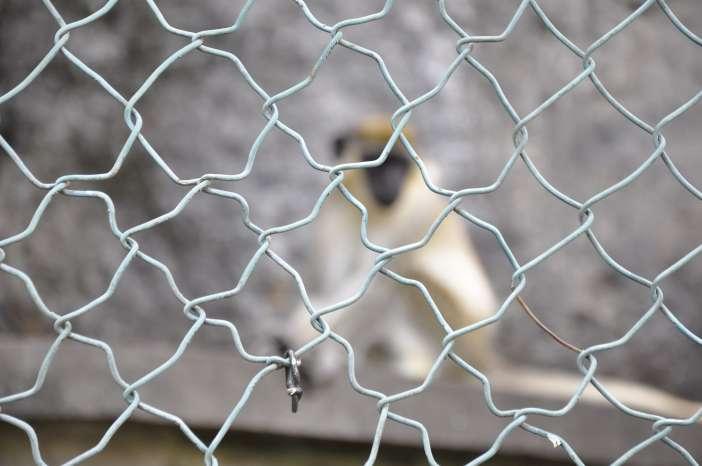 Exijo el Cierre del Zoo de Povoaçao, AZORES by © Rocío Pastor Eugenio ® WOMANWORD