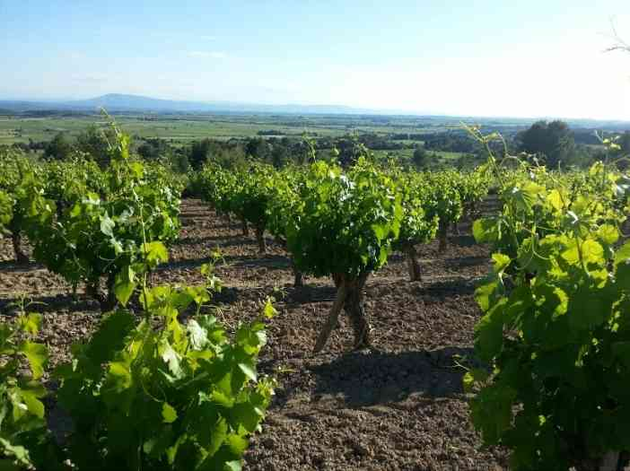 Minervois by © Rocío Pastor Eugenio ® WOMANWORD