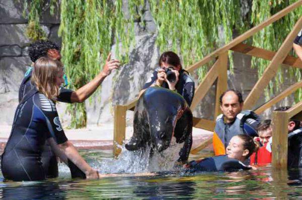 WILD WOMANWORD: Baño entre leones marinos by WOMANWORD